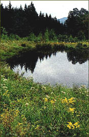Moosewood Ponds at the High Ponds Farm - Photograph by Rolf Anderson